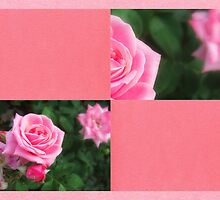 Pink Roses in Anzures 1 Blank Q11F0 by Christopher Johnson