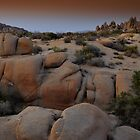 Joshua Tree Twilight by Bob Moore