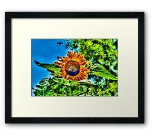 Sunflower in New York City, USA Framed Print
