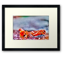 Hot Chili Pepper Micro Photography Framed Print