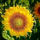 Small Sun For My Dear Grandson Kacperek by Redrose10