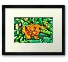 Orange Flower in Malta Framed Print