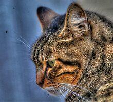 Concentrated Cat in Malta by Noam  Kostucki