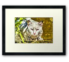 White Cat Ready to Jump in Malta Framed Print