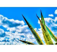 Cactus Plant in Malta Photographic Print