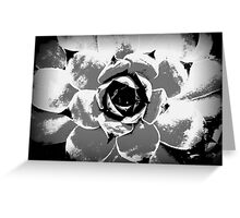 Hens and Chicks Plant Greeting Card