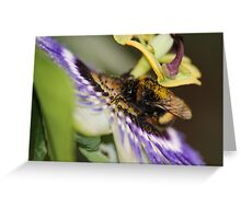 Lunch Time at the Pretty Flower Greeting Card