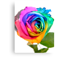 Rainbow Rose 01 Canvas Print