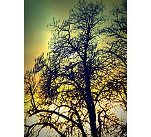 Tree Silhouette Photographic Print