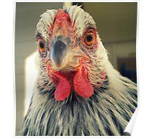 Wyandotte Chicken Poster