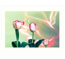 Pink Tulips Painted with Light Art Print