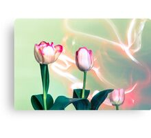 Pink Tulips Painted with Light Metal Print