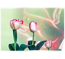 Pink Tulips Painted with Light Poster
