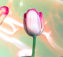 Pink Tulips Painted with Light Sticker