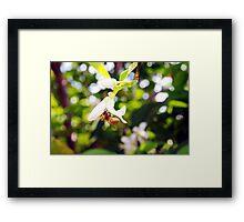 Bee heaven Framed Print