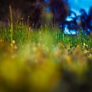 Blurred Grass by Tyson Battersby