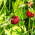 wild strawberries by lins