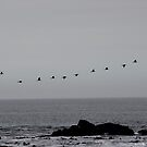 Cormorants heading home by fourthangel