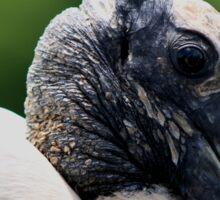Wood Stork Sticker