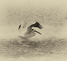 Pelican Landing in black and white by Thomas Young