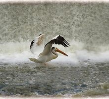 Pelican Landing in Color by Thomas Young