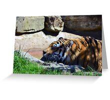 Tiger playing Greeting Card