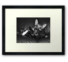 crazy dogs Framed Print