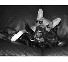 crazy dogs Photographic Print
