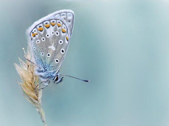 Kind of Blue... by Bob Daalder