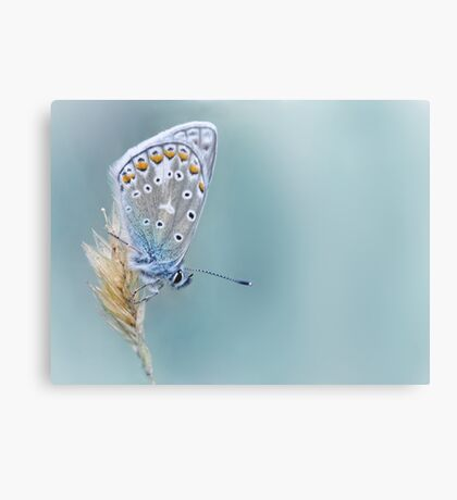 Kind of Blue... Canvas Print