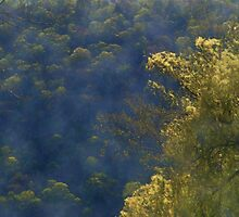 Golden Willow by triplelll