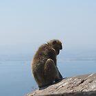 Gibraltar Monkey by caitlin2005