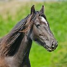 Horse Portrait by M.S. Photography & Art