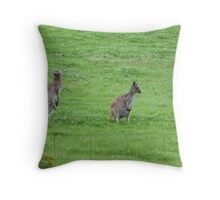 Female Kangaroo, Joey at foot & another in the Pouch. Mt. Pleasant, Sth. Aust. Throw Pillow