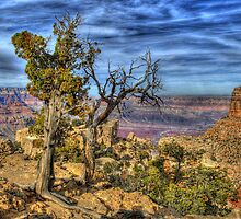 The Scenic Grand Canyon by Diana Graves Photography