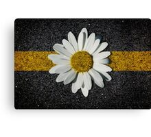 A daisy in the asphalt Canvas Print