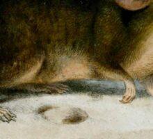 St. Kilda House Mouse (Extinct Animals Series) Sticker