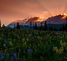 Sunbeam Meadow by DawsonImages