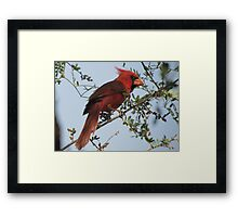 Northern Cardinal~ Male Framed Print