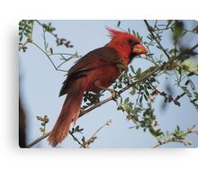 Northern Cardinal~ Male Canvas Print