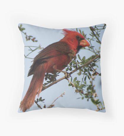 Northern Cardinal~ Male Throw Pillow