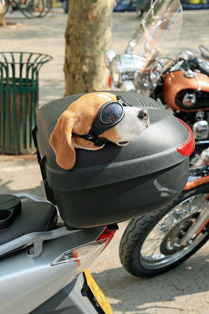 Dog on a Motorbike by DRWilliams
