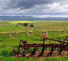 Springtime on the Vines by jwwallace