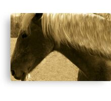 Horse in Sepia brown horse blond mane equine photography Canvas Print