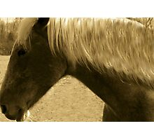 Horse in Sepia brown horse blond mane equine photography Photographic Print
