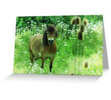 Hillbilly Horse funny Exmoor Pony photograph Greeting Card