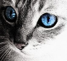 Serenity - B/W Cat with Blue Eyes by ShinyDesigns