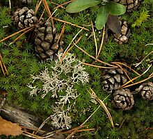 Cones in moss by gpetuhov