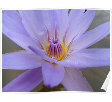 Blue Wonderful Waterplant Poster