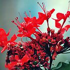 Mystic Red Flowers by tropicalsamuelv